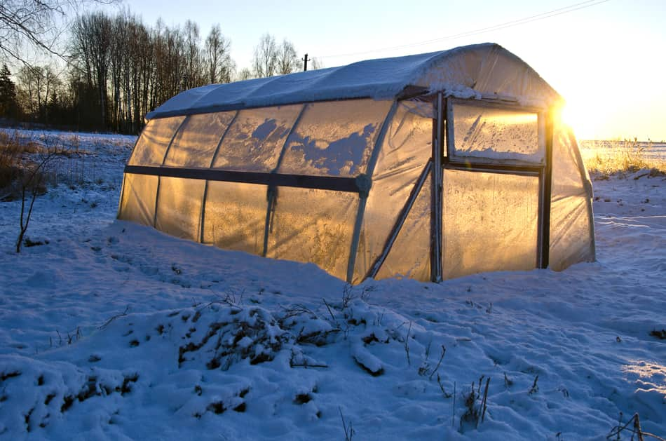 Winter greenhouse with snow - how to heat without electricity