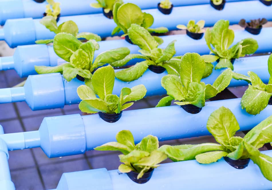 Reasons to change hydroponic solution