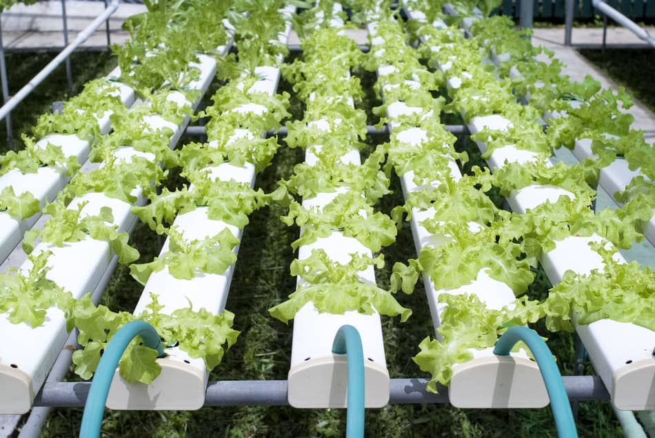 How Often Should You Change The Water In A Hydroponic System?