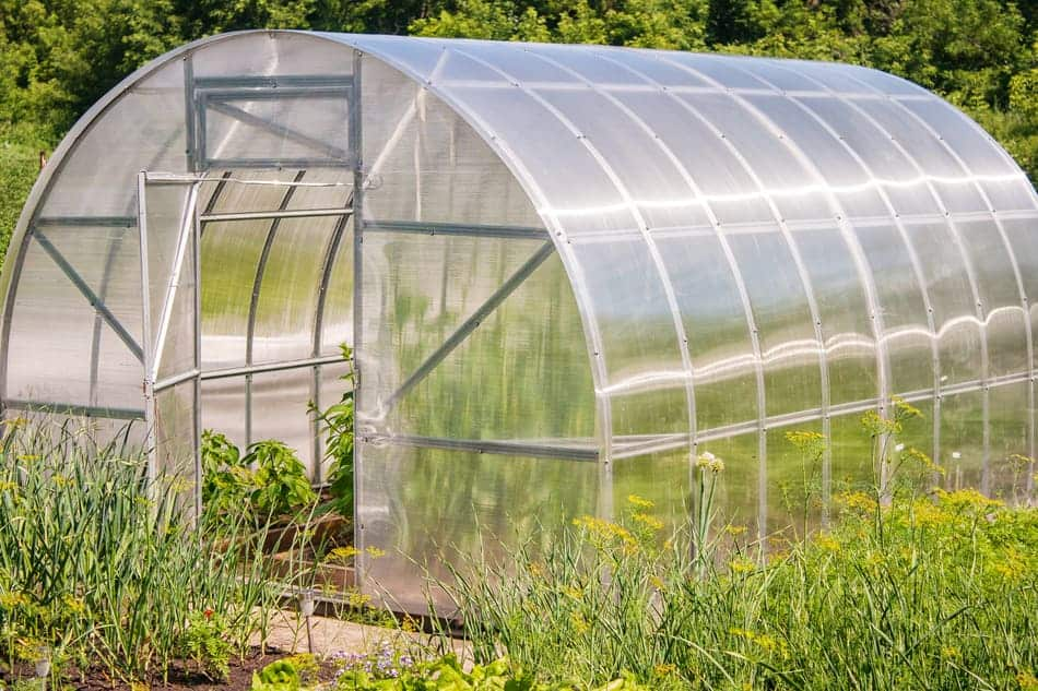 Greenhouse with plastic covering