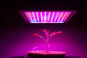 about LED grow lights