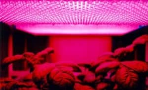 how far should grow lights be from plants