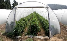 how to build a hoop greenhouse