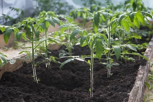 preparing the soil for the best crop yield and plant health