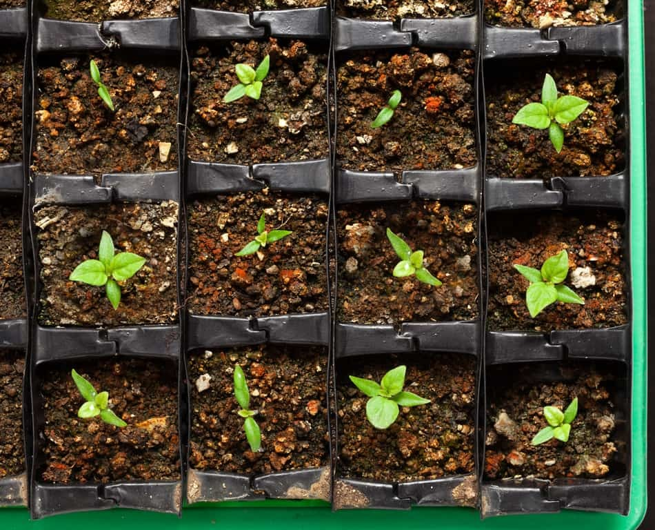 Keeping things warm and monitoring your seedlings