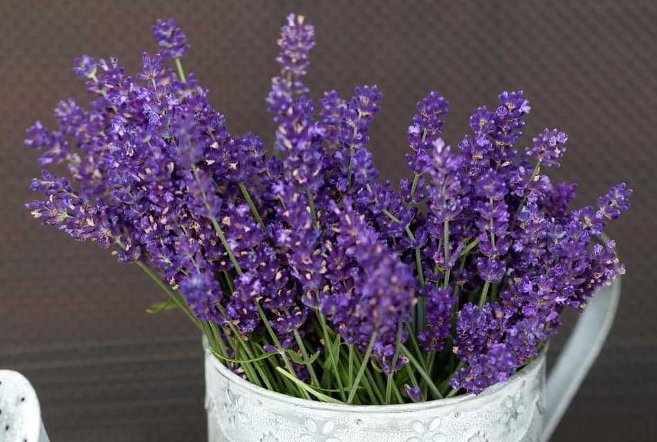 what to do with harvested lavender