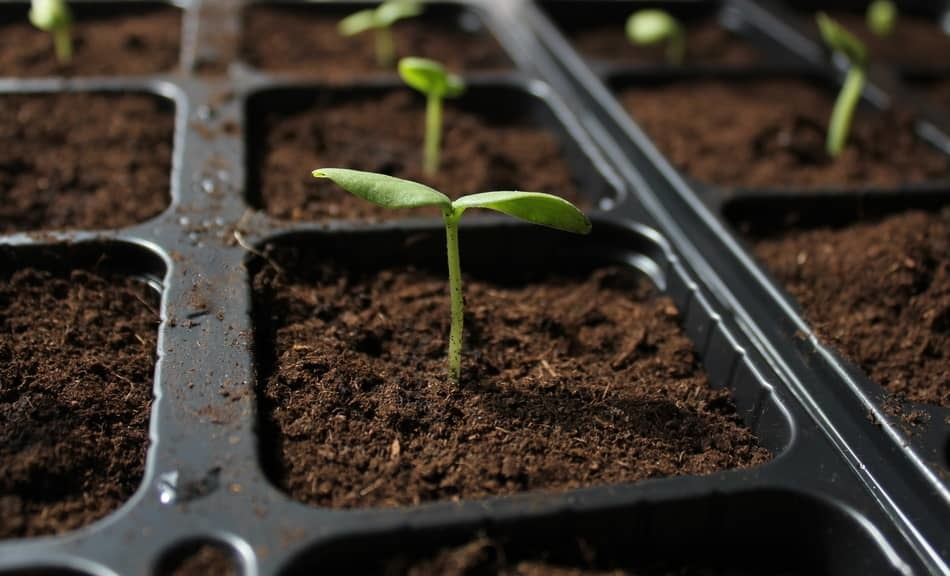 seedling care