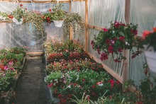 how to cool a greenhouse without electricity