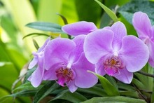 how to grow orchids in a greenhouse