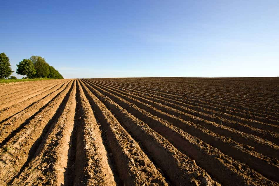 spacing and planting for potatoes