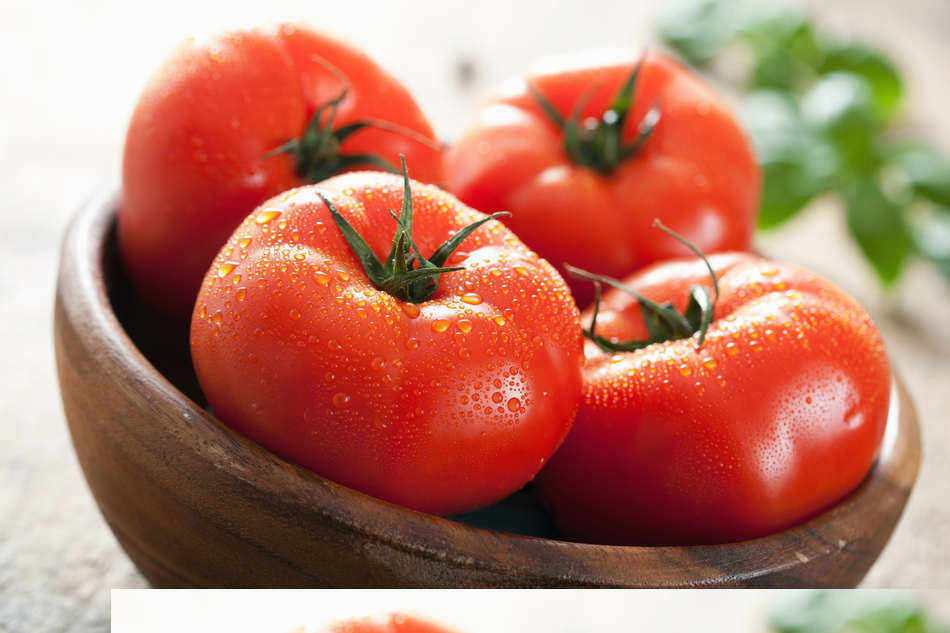 how to pick and store tomatoes