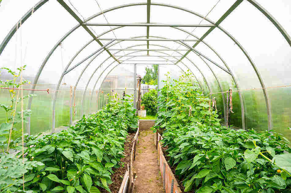 how to use a greenhouse; greenhouse basics