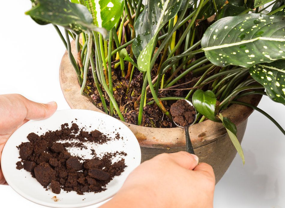 tips for adding coffee grounds directly to your soil