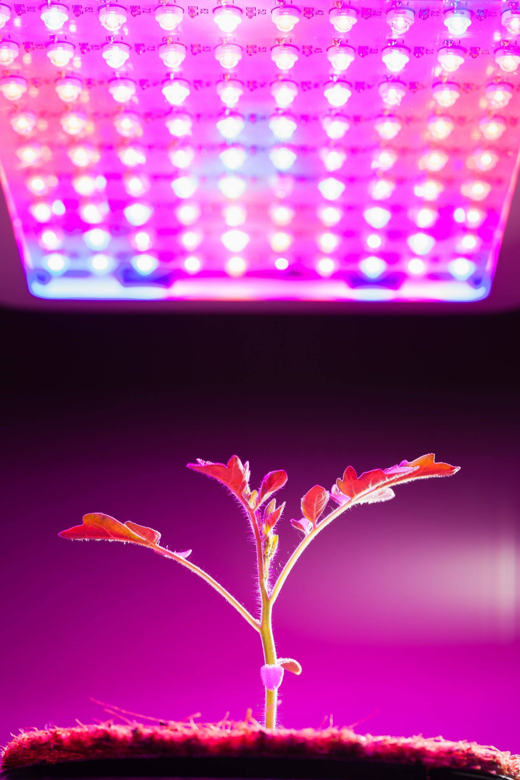 why do i need grow lights for my indoor greenhouse