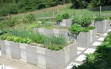 Can you grow plants in cinder blocks?