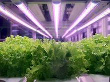 Vegetables with grow lights