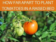 How Far Apart To Plant Tomatoes In A Raised Bed