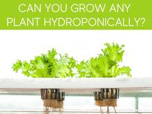 Can You Grow Any Plant Hydroponically?