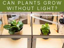 Can Plants Grow Without Light?
