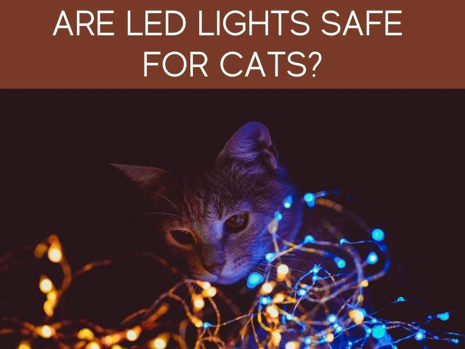 Are LED Lights Safe for Cats?