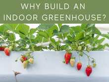 Why Build An Indoor Greenhouse?