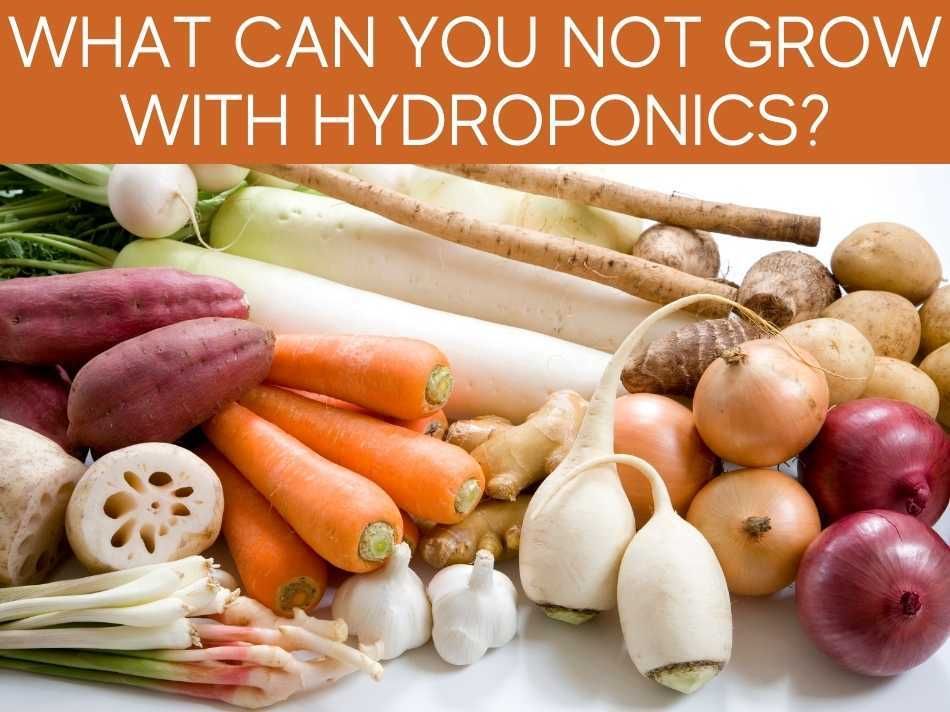 What Can You Not Grow With Hydroponics?