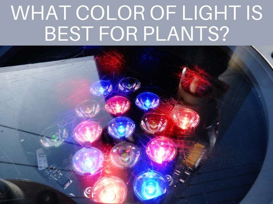 What Color Of Light Is Best For Plants?