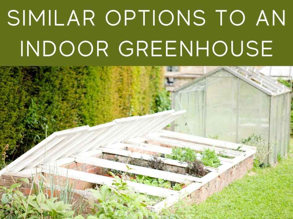 Similar Options To An Indoor Greenhouse