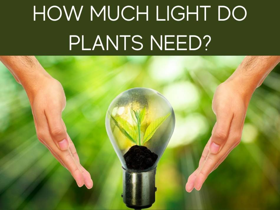 How Much Light Do Plants Need?