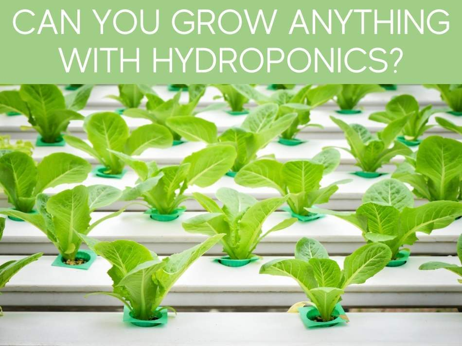 Can You Grow Anything With Hydroponics?