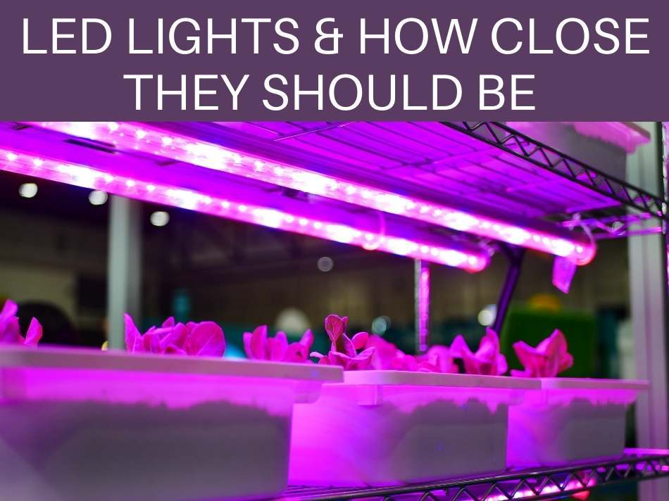 LED Lights & How Close They Should Be