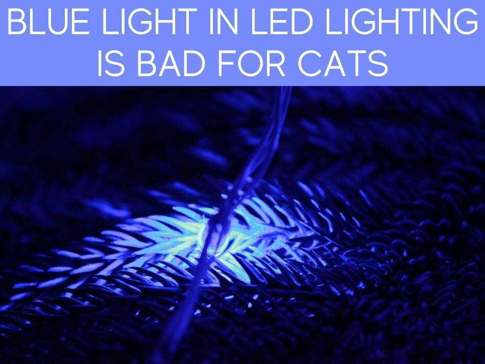 Blue Light In LED Lighting Is Bad For Cats