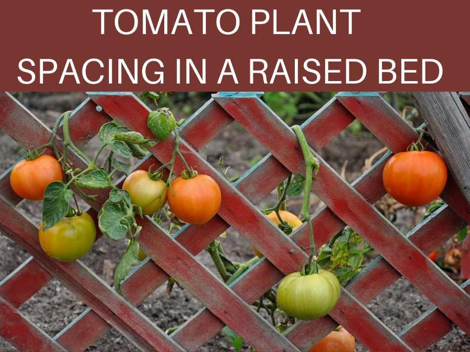 Tomato Plant Spacing In A Raised Bed