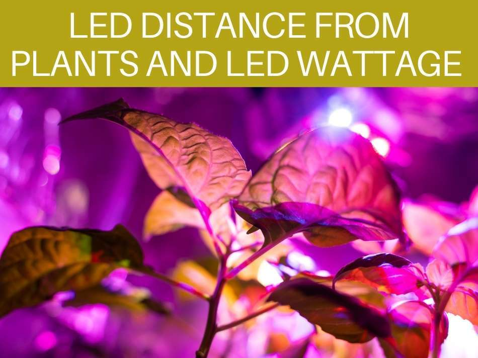 LED Distance From Plants And LED Wattage