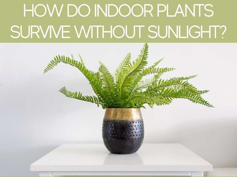 How Do Indoor Plants Survive Without Sunlight?