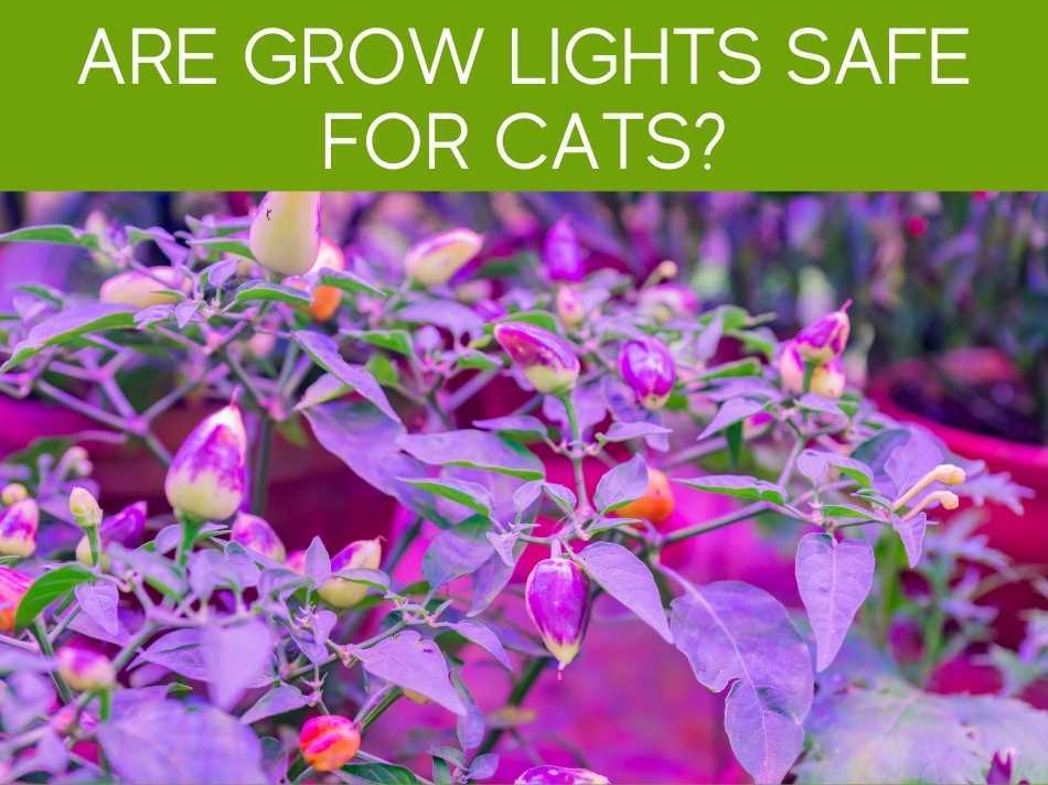 Are Grow Lights Safe For Cats?