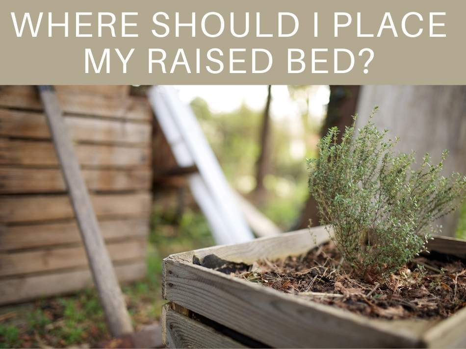 Where Should I Place My Raised Bed?