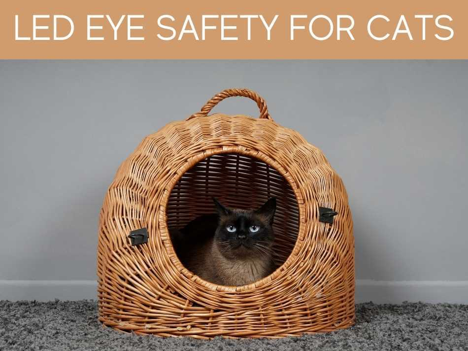 LED Eye Safety For Cats