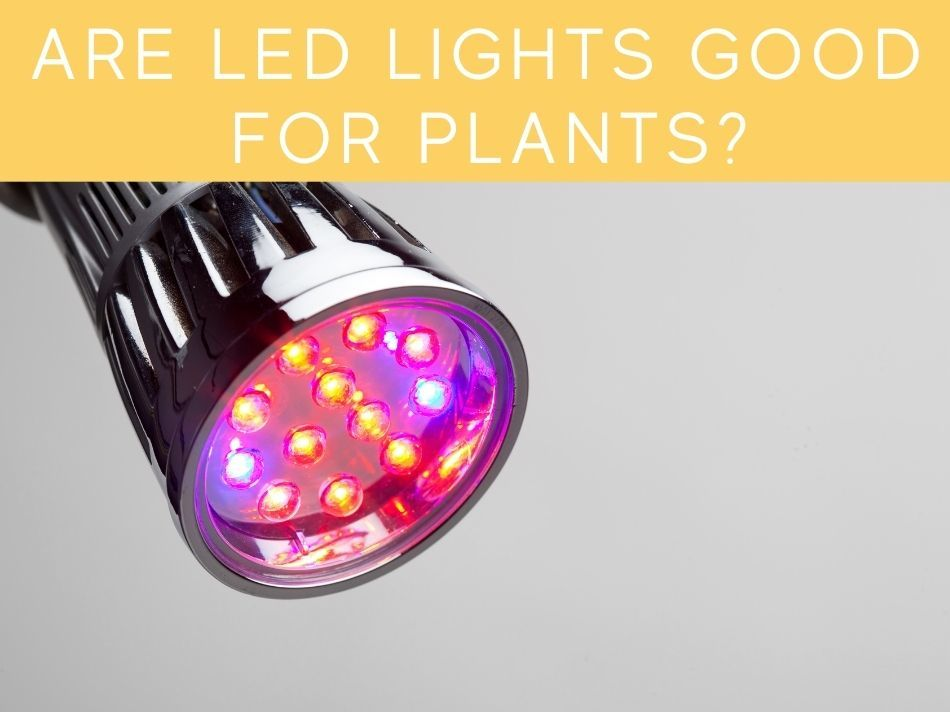 Are LED Lights Good For Plants?