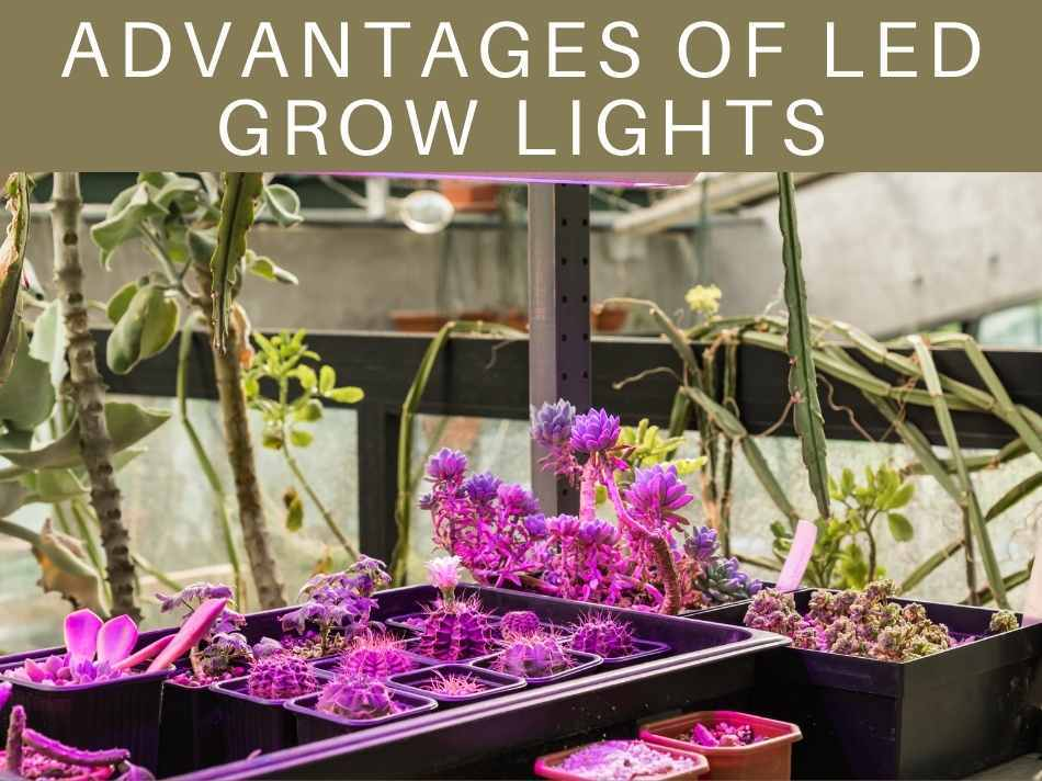 Advantages Of LED Grow Lights