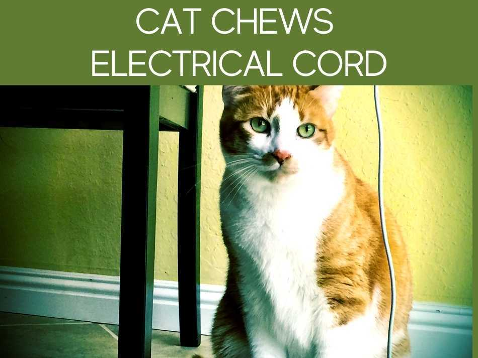 Cat Chews Electrical Cord
