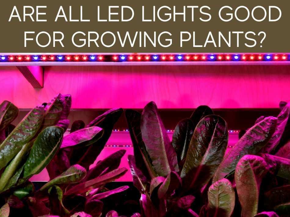 Are All LED Lights Good For Growing Plants?