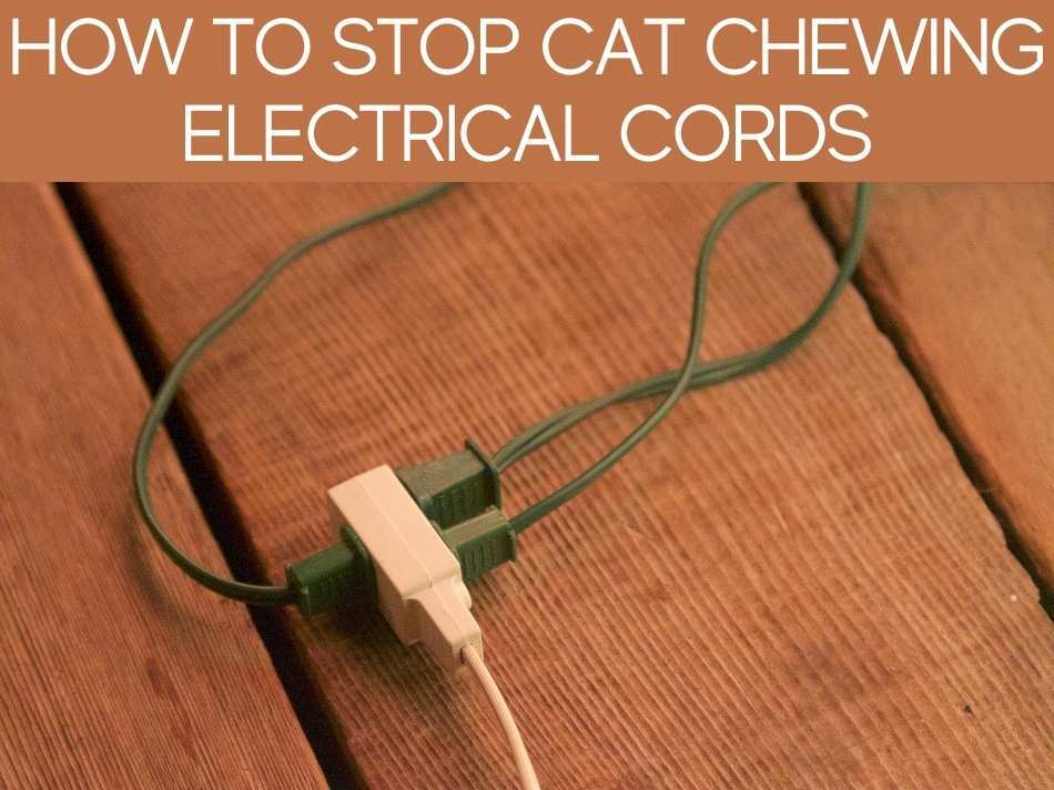 How To Stop Cat Chewing Electrical Cords