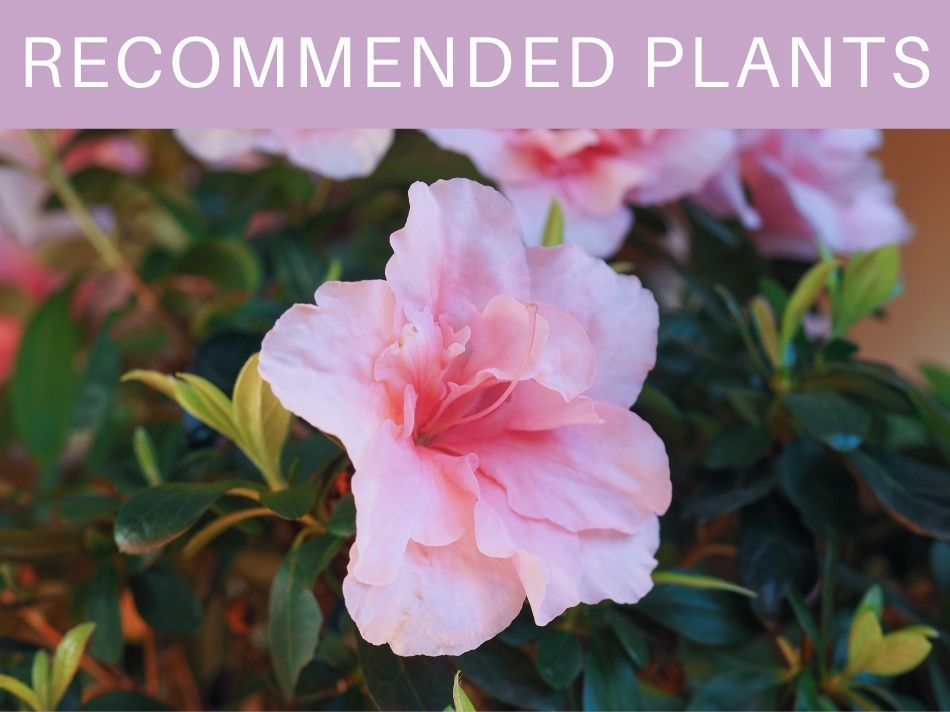 Recommended Plants