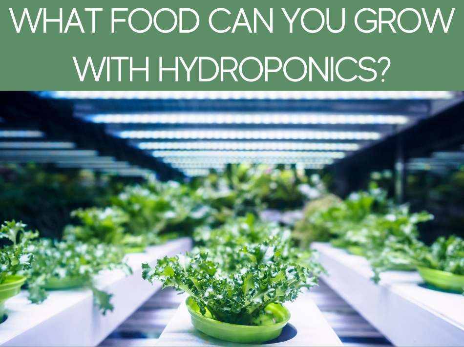 What Food Can You Grow With Hydroponics?