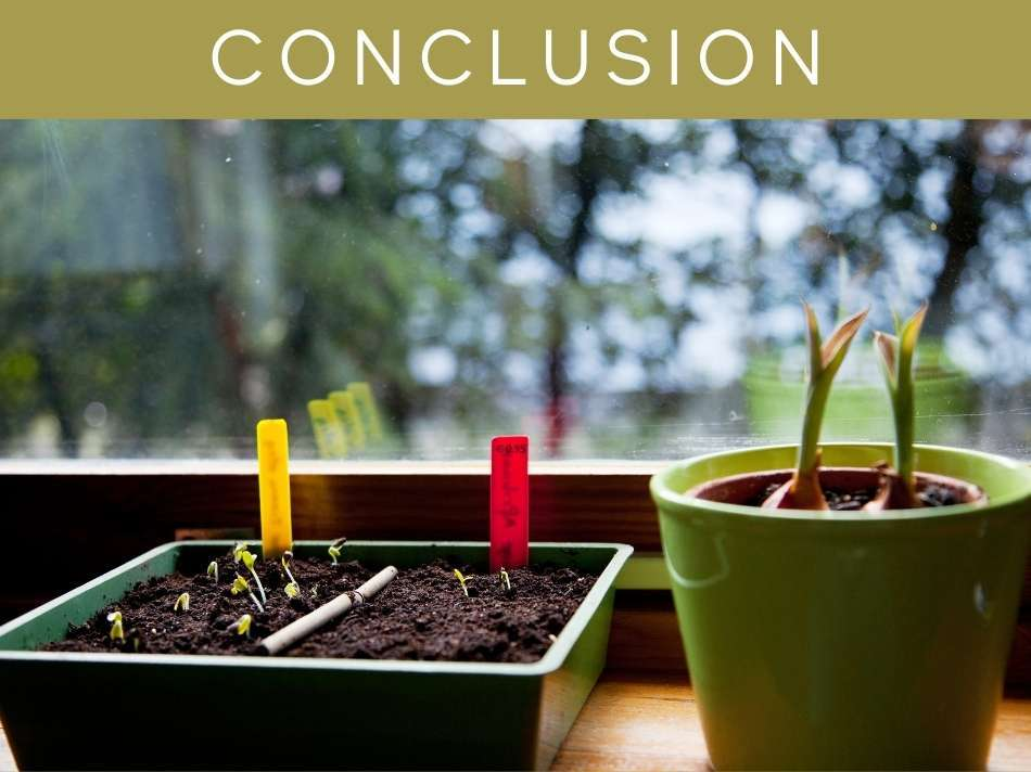 Can Plants Grow Without Sunlight?