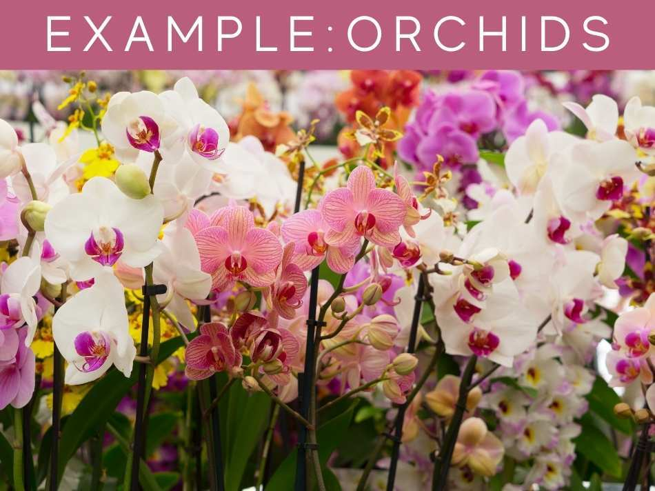 Example: Orchids
