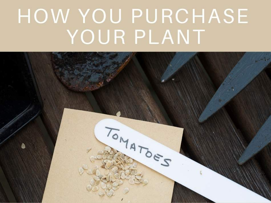 How You Purchase Your Plant