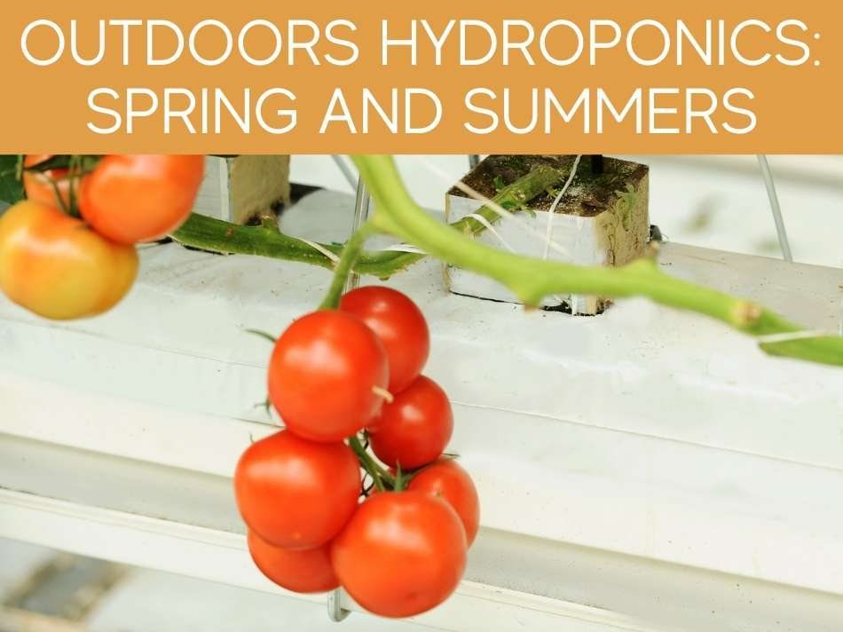 Outdoors Hydroponics: Spring And Summers