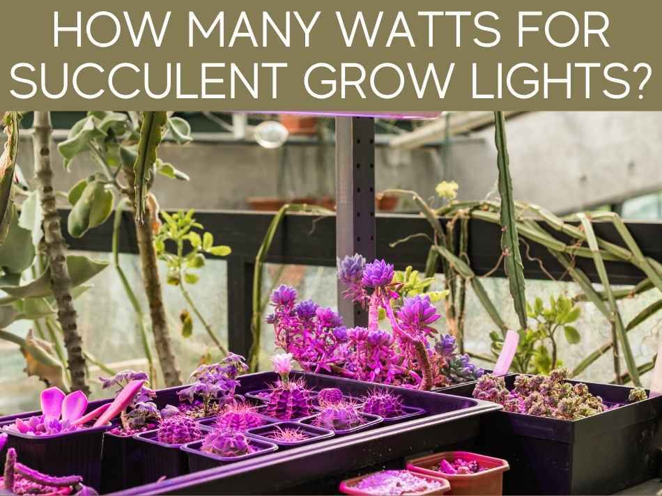How Many Watts For Succulent Grow Lights?